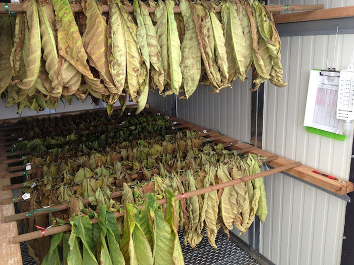 Climatized kiln for cure testing cigar tobacco leaf