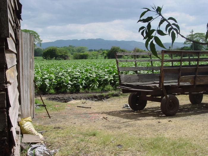 Quiet, cool scene next to a tobacco barn in Esteli, Nicaragua. The fields are very hot!